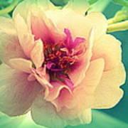 Moss Rose Abstract Art Print