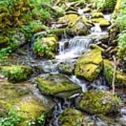 Mossy Creek Art Print by Bob Jackson
