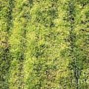 Mossy Grass Art Print