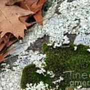 Mossy Leaves Art Print