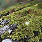 Mossy Log Art Print