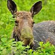 Mossy Moose Art Print