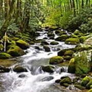 Mossy Mountain Stream Art Print