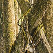Mossy Pier Art Print
