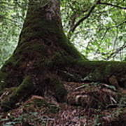 Mossy Roots Art Print