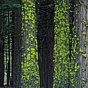 Mossy Sentinels Art Print