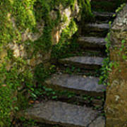 Mossy Steps Art Print by Carla Parris