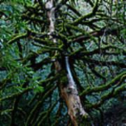 Mossy Tree Art Print