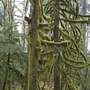 Mossy Trees Art Print