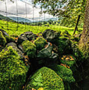 Mossy Wall Art Print