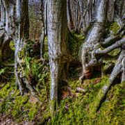 Mossy Woodland  Art Print