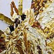 Moth A Million Pieces Art Print