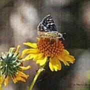 Moth And Flower Art Print