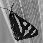 Moth Bw Macro Art Print