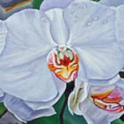 Moth Orchids Art Print