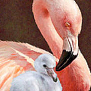 Mother And Baby Flamingo Art Print
