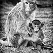 Mother And Baby Monkey Black And White Art Print