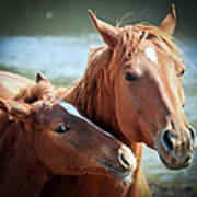 Mother And Filly Art Print