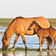 Mother And Foal Art Print by Bob Decker