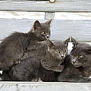 Cat And Kittens Art Print