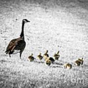Mother Goose Print by Elena Elisseeva