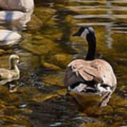 Mother Goose Il Art Print