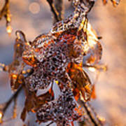 Mother Nature's Christmas Decorations - Golden Oak Leaves Jewels Art Print