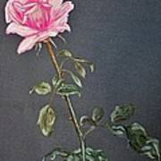 Mothers Rose Art Print