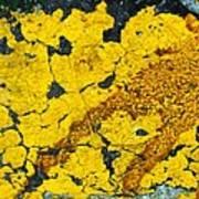 Motor Oil On Yellow Art Print by Robert Knight