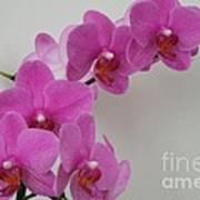 Mottled Orchid 1 Art Print