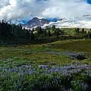 Mount Baker Lupine Meadows Art Print