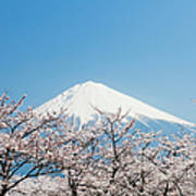 Mount Fuji & Cherry Blossom Art Print