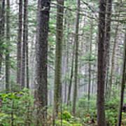 Mount Jim - Kinsman Notch New Hampshire Art Print