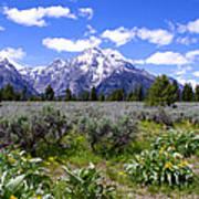 Mount Moran Wildflowers Print by Brian Harig