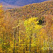 Mountain Autumn Art Print