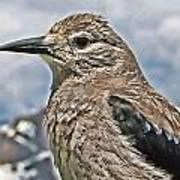 Mountain Bird Art Print