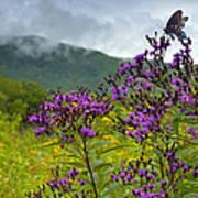 Mountain Butterfly  Art Print