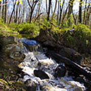Mountain Creek In Spring Art Print