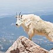 Mountain Goat Up High Art Print