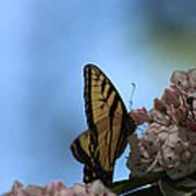 Mountain Larual Butterfly Art Print