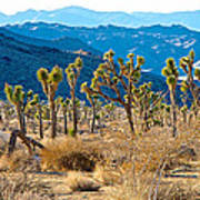 Mountain Layer Landscape From Quail Springs In Joshua Tree Np-ca- Art Print