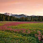 Mountain Meadow Color Art Print