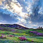 Mountain Meadow Of Flowers Art Print