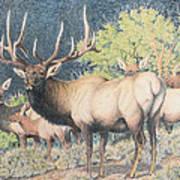 Mountain Monarch Art Print
