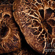 Mountain Mushrooms   #3670 Art Print