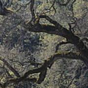 Mountain Oak Art Print