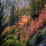 Mountain Side Colors Art Print