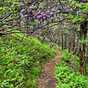 Mountain Trail With Catawba Rhododendron Art Print