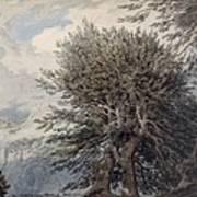 Mountainous Landscape With Beech Trees Art Print