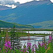 Mountains And Fireweed Along North Sascatchewan River Along Icefield Parkway-ab Art Print